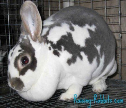 5 Las pistas para el conejo embarazada