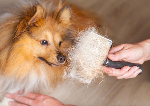 5 Mitos más comunes sobre la preparación del animal doméstico