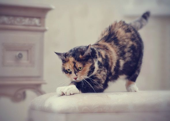 Mitos comportamiento del gato: 5 más decodificados