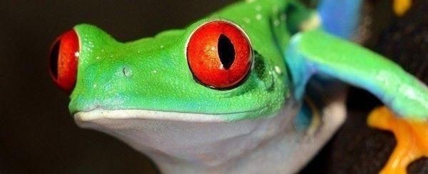 Cómo medicar a su reptil
