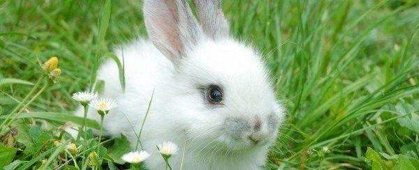Cuidado de verano conejo