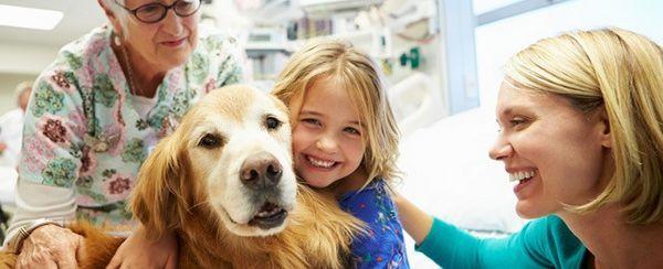 En honor a la increíble labor de animales de terapia