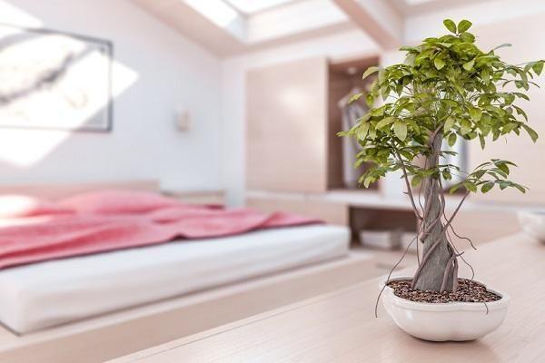 Cómo decorar un estilo Feng Shui dormitorio