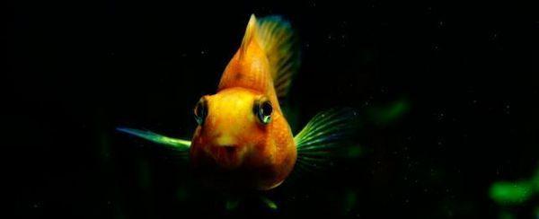 Top peces de agua dulce 20