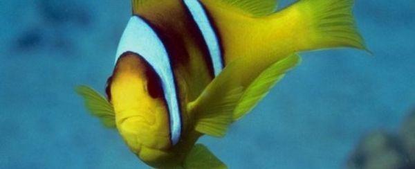 La anatomía externa de un pez
