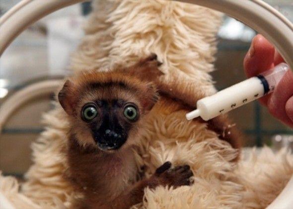 10 Animales más lindos del bebé de Vetstreet de 2013