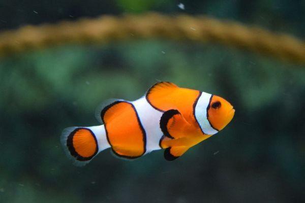 ¿Qué hacer con los peces oficina durante las vacaciones