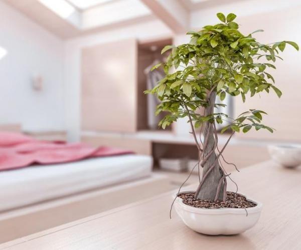 ¿Qué plantas mejorar el feng shui de mi casa?